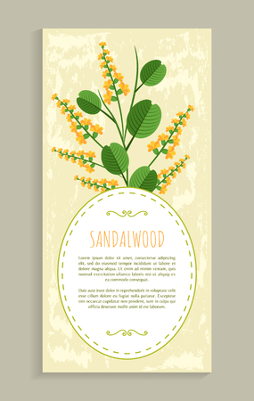 Sandalwood poster with herb, banner and headline, aromatic flower and leaves, vector illustration poster oval frame for text Иллюстрация