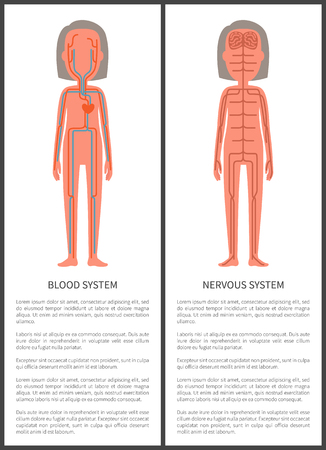 Blood and nerve systems in human body posters set with editable text title, woman organism containing veins arteries isolated on vector illustration
