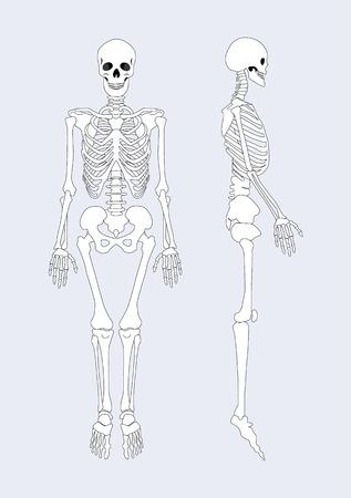 Skeletal System of Human Body Vector Illustration Archivio Fotografico - 106315714