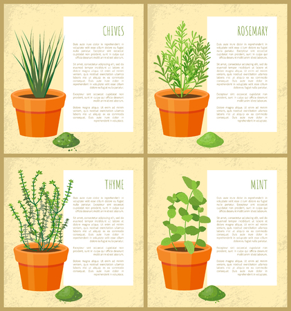 Chives rosemary collection, posters thyme and mint, banners with headline text sample vector illustration green leaves dry herbs set, fresh seasoning Illustration