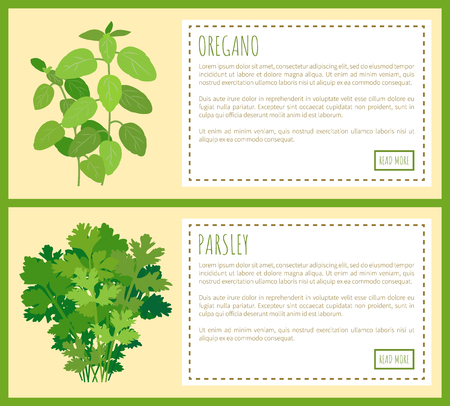 Oregano and parsley thick bunches on banners. Fragrant green plant used in culinary. Fresh greenery plants cartoon vector illustrations web posters