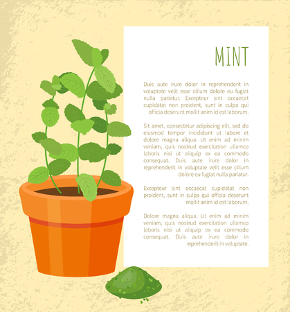 Mint and powder text sample with info in frame, spice green color, greenery healthy condiment pot, leaves of dry pile vector illustration poster