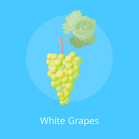 White Grapes Poster with Bunch White Gape Vector
