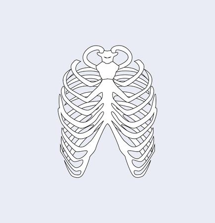 Os du sternum, partie du corps humain du système squelettique, reliant les côtes via le cartilage formant la cage thoracique de la partie avant, image isolée sur illustration vectorielle Vecteurs