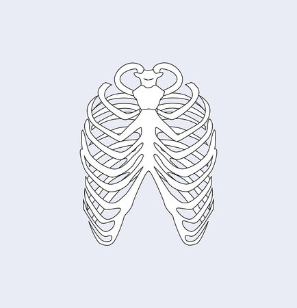 Sternum bones, part of skeletal system human body, connecting ribs via cartilage forming front part rib cage, image isolated on vector illustration
