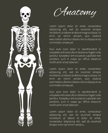 Anatomy Poster and Skeleton Vector Illustration Illustration