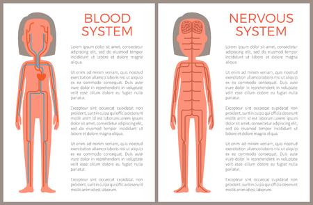 Échantillon de sang et de systèmes nerveux d'illustration vectorielle de construction corporelle, cerveaux avec ensemble de terminaisons nerveuses sensibles, flux de plasma bleu dans les veines de l'organisme