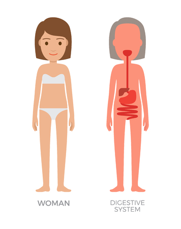Digestive system and woman poster wearing underwear consisting of pants bra, anatomic human body structure, isolated on white vector illustration Illustration