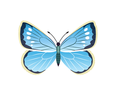 Morpho peleides blue butterfly with dots, wings with ornaments and antenna, vector illustration isolated on white background 일러스트