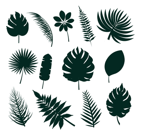 Leaves silhouette collection, set icons colorless images with tropical leaf, herbs of different shapes vector illustration isolated on white