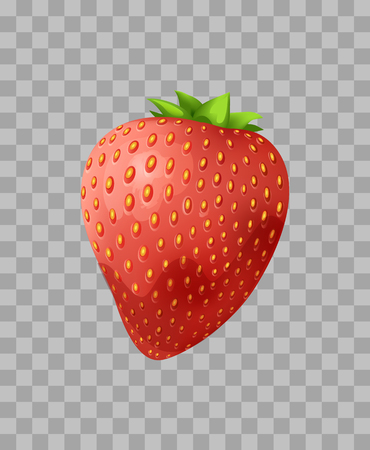 Strawberry closeup, fruit widely grown hybrid species of genus fragaria, fleshy part of berry with seeds leaf on top transparent vector illustration Çizim