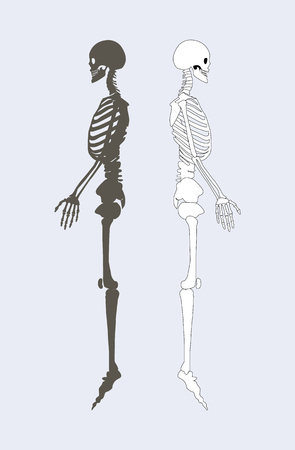 Skeletal system of human body black and white skeletons profile view of structure internal framework people bones vector illustration isolated on blue