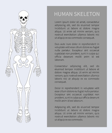 Human skeleton front view with bones and skull, banner text sample, headline in grey box poster, vector illustration isolated on white background