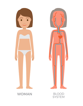Blood Woman System Educational Vector Illustration