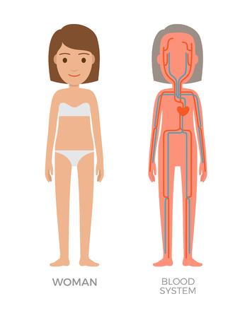 Illustration vectorielle éducative du système de femme de sang