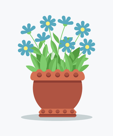 House Plant with Tender Blue Blossom in Clay Pot Imagens