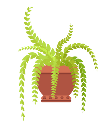 Fern indoor herbal with long leaves in big clay pot. Decorative house flowerpot with large foliage. Room leafy plant in pot isolated vector illustration. Illustration