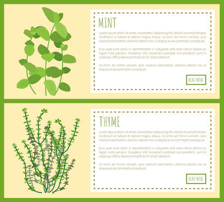Mint and Thyme Condiments, Vector Illustration