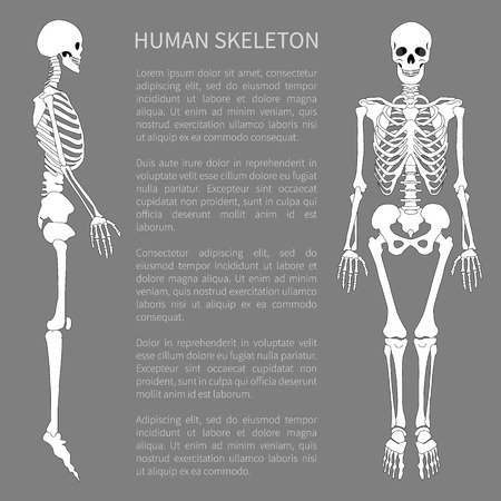 Human skeleton text sample with headline giving information about skeletal system supporting organism structure internal framework vector illustration Illustration