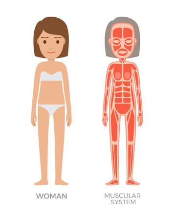 Muskelsystem der bunten Fahne der jungen Frau Vektorgrafik