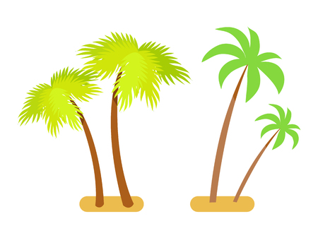 Palms collection green set. Trees with broad big branchess that have leaves. Exotic tropical plant vector illustrations isolated on white background. Illusztráció