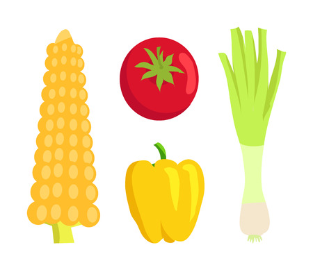 Vegetable collection meal, corn and ripe tomato, onion with pepper of yellow color, organic food set vector illustration isolated on white background.