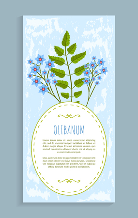 Olibanum leaves and flowers of blue color herb, herbal banner and headline, resin frankincense vector illustration isolated poster frame for text Illustration