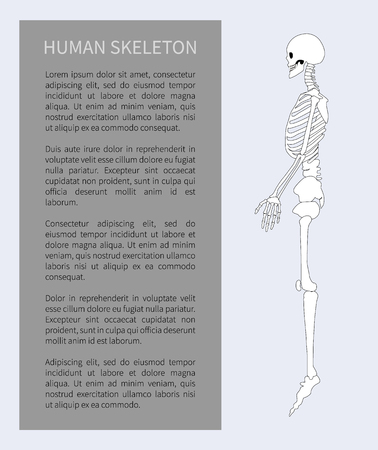 Human skeleton system in profile view poster and editable explanation grey box skeletal organism structure, vector illustration isolated on white Illustration