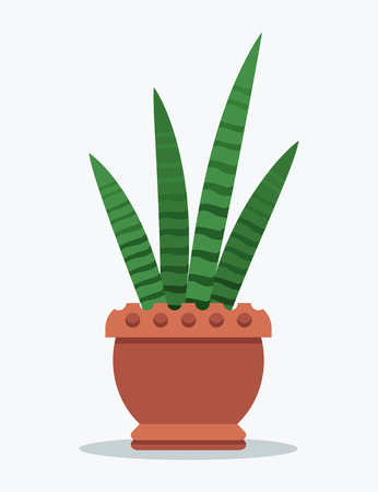 Sansevieria long striped leaves in big clay pot. Indoor decorative plant with unusual foliage. Potted leaf herb isolated vector illustrationon white Illustration