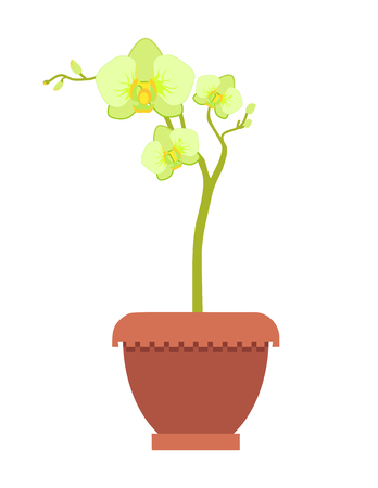 Yellow oriental orchid on thin stem in clay pot. Exotic flower with beautiful blossom. Blooming bud as houseplant light scent vector illustration.