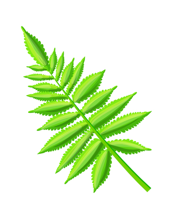 Royal fern, decorative leaf, exotic plant light-green color, tropical branch item, vector isolated on white, pattern of hawaii flora, botanical illustration