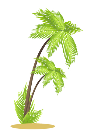 Tall tropical palm trees on small piece of sand. Exotic plants with big leaves. Greenery that grow in hot countries isolated vector illustration. Illustration