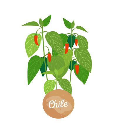 Chile and emblem with headline, round label, green leaves and ripe peppers, chilli spice condiment vector illustration isolated on white background Illustration