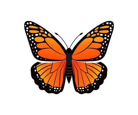 Viceroy limenitis archippus butterfly of orange color with ornaments and decorated wings, morpho insect vector illustration isolated on white Illustration