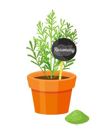 Rosemary and board with text, rosemary s spicy powder, plant in brown pot, spice condiment organic herb grown at home, vector healthy cooking ingredient