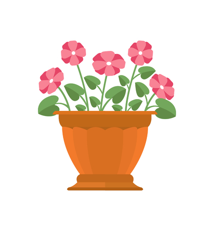 Periwinkle flower in brown pot house plant with pink color blossoms houseplant, decoration vector illustration isolated on white background Illustration