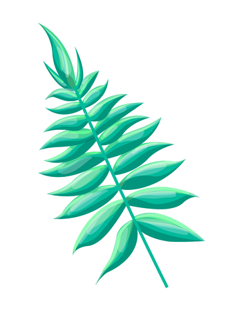 Royal fern tropical leaf, osmunda regalis type exotic plant, green decorative element, vector illustration, isolated on white, branch of herb foliage