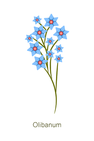 Olibanum herb poster title with flowers of blue color, banner and headline, blooming frankincense plant buds vector illustration, isolated on white
