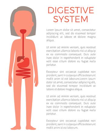 Digestive Female System Color Vector Illustration