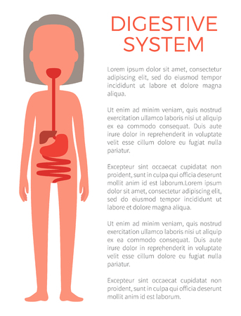 Digestive Female System Color Vector Illustration
