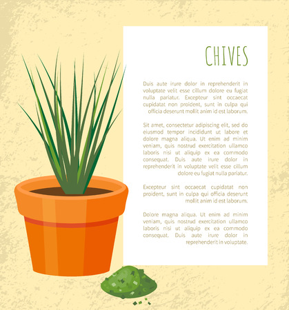 Chives poster with plant in pot, chive ground powder of verdant color, text sample vector illustration green leaves and dry herb healthy condiment