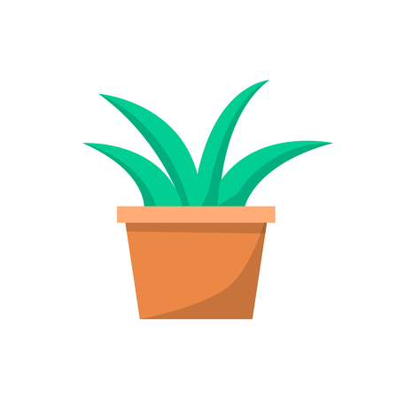 Green Indoor Plant in Clay Pot for Office Decor