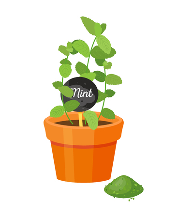Mint plant and label with name, leaves powder of green color, emblem title, spicy melissa, spice condiment vector illustration isolated on white