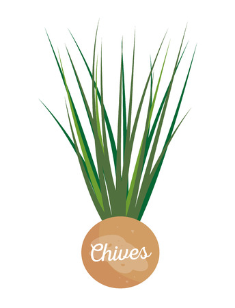 Chives label leaflet, perennial plant chive with headline, greenery for cooking and garnishing dishes, healthy seasoning isolated vector illustration Ilustração