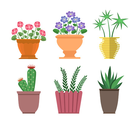 House plants types collection, set of cactus, haworthia and chionodoxa in pots and vases, decor houseplants vector illustration isolated on white Banco de Imagens - 110353378