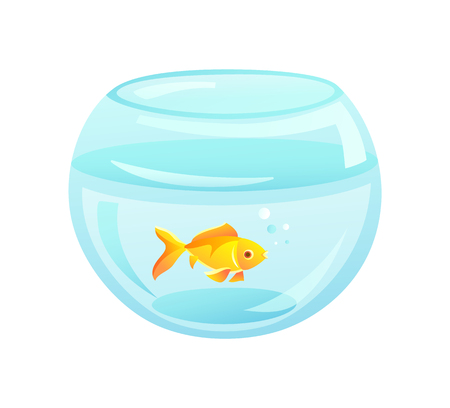 Golden fish in aquarium of rounded shape, golden fish domestic pet in fishbowl, bowl and bubbles vector illustration isolated on white background
