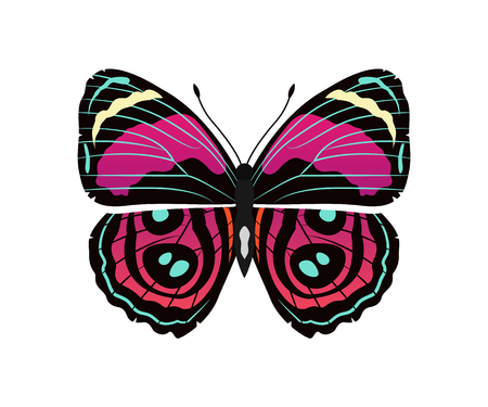 Riodinidae butterfly metalmark with metallic-looking spots wings, morpho butterfly of pink and red color vector illustration isolated on white