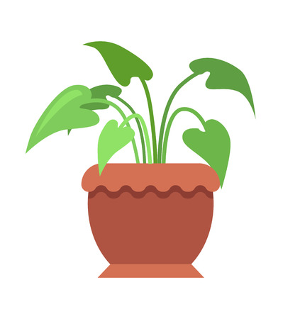 Aglaonema room plant in pot, potted indoor greenery placed with large wide leaves, natural interior decor vector illustration, isolated on white.