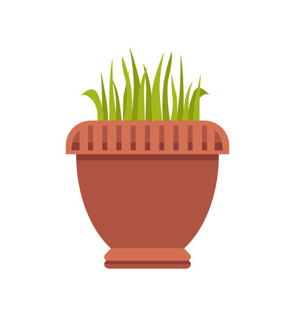 Acorus gramineus big pot as indoor plant. House herb that looks like grass. Herbal plants in capacious clay vase isolated vector illustration.