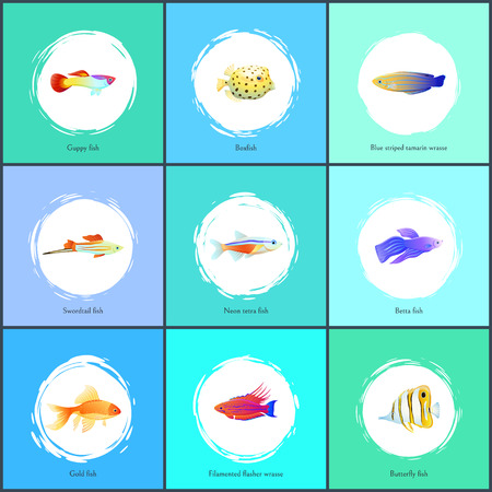Boxfish and Blue Tamarin Set Vector Illustration